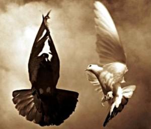 два голубя - белый и чёрный